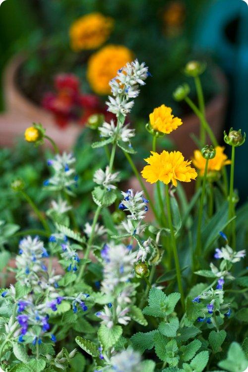 Porch_flowers